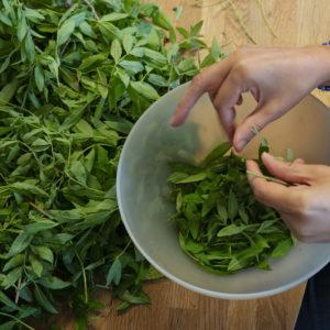 Tisanes et herbes aromatiques